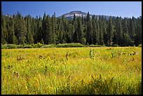 Wawona Dome viewed from Wawona meadow. Yosemite National Park, California, USA. (color)