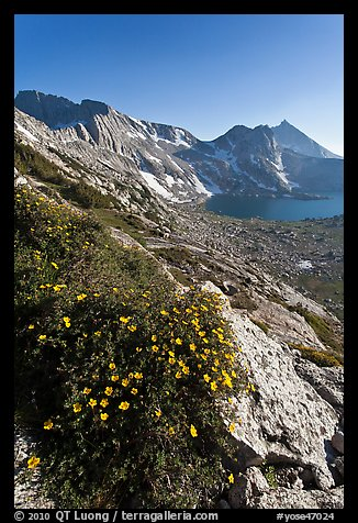 Wildflowers on slope, Sheep Peak and Upper McCabe Lake. Yosemite National Park (color)