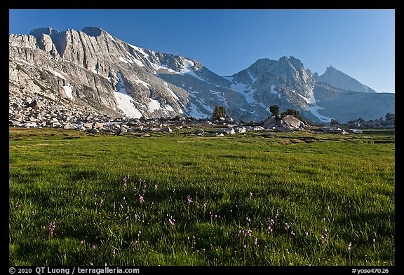 Meadow with summer flowers, North Peak crest. Yosemite National Park, California, USA.
