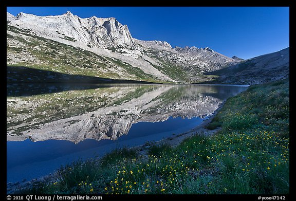 Flowers, Sheep Peak reflected in Roosevelt Lake. Yosemite National Park (color)