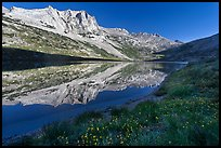Flowers, Sheep Peak reflected in Roosevelt Lake. Yosemite National Park, California, USA. (color)