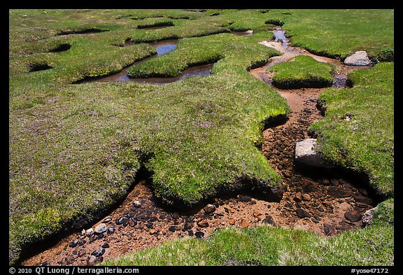 Meandering stream in grassy alpine meadow. Yosemite National Park (color)