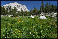 Flowers, pine trees, and mountain. Yosemite National Park, California, USA. (color)