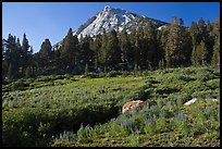 Sub-alpine scenery with flowers, stream, forest, and peak. Yosemite National Park ( color)