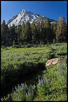 Sub-alpine landscape with stream, flowers, trees and mountain. Yosemite National Park ( color)