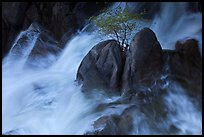 Tree on boulders surrounded by tumultuous waters, Cascade Creek. Yosemite National Park, California, USA. (color)