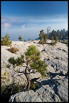 Pine sapling on Sentinel Dome. Yosemite National Park ( color)