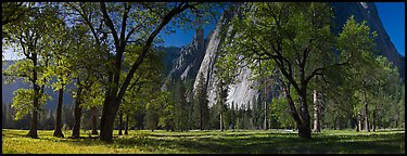 El Capitan Meadows, Black Oaks and Cathedral Rocks. Yosemite National Park (Panoramic color)