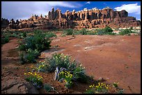 Wildflowers, sandstone pillars, Klondike Bluffs. Arches National Park ( color)