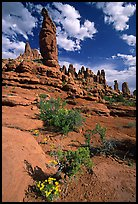 Wildflowers, sandstone pillars, Klondike Bluffs. Arches National Park, Utah, USA. (color)