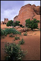Wildflowers, sand and rocks, Klondike Bluffs. Arches National Park, Utah, USA.