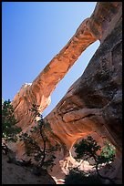 Double O Arch, afternoon. Arches National Park, Utah, USA.