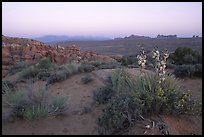 Yucca, Fiery Furnace, and La Sal Mountains, dusk. Arches National Park, Utah, USA.