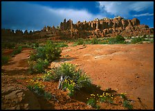 Wildflowers and rock pillars, Klondike Bluffs. Arches National Park, Utah, USA.