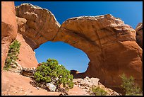 Juniper and Broken Arch. Arches National Park, Utah, USA. (color)