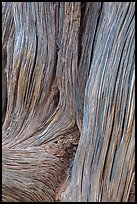 Detail of juniper bark. Arches National Park ( color)