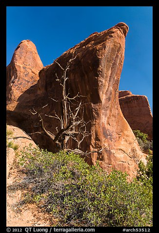 Juniper tree and fins. Arches National Park (color)