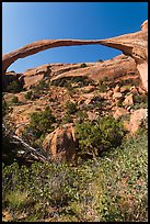 Landscape Arch with fallen boulders. Arches National Park, Utah, USA. (color)