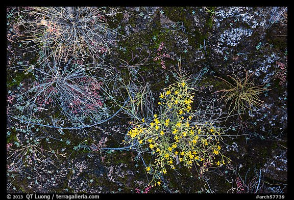 Ground view: wildflowers and mosses, Courthouse Wash. Arches National Park (color)
