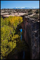 Cottonwood trees, Courthouse Wash creek and cliffs, La Sal mountains. Arches National Park ( color)