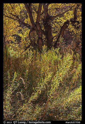 Grasses and trees in autumn, Courthouse Wash. Arches National Park (color)