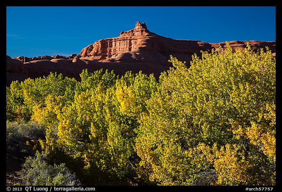 Cottonwood trees in fall foliage below red rock cliffs, Courthouse Wash. Arches National Park (color)