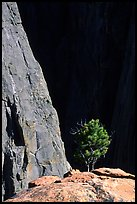 Tree on rim near exclamation point. Black Canyon of the Gunnison National Park, Colorado, USA. (color)