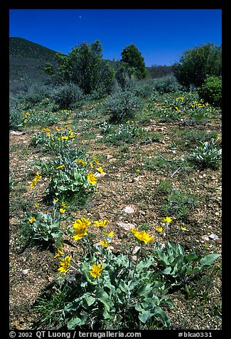 Wildflowers on mesa inclinado. Black Canyon of the Gunnison National Park (color)