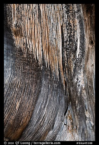 Juniper trunk close-up. Black Canyon of the Gunnison National Park (color)