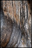 Juniper trunk close-up. Black Canyon of the Gunnison National Park ( color)