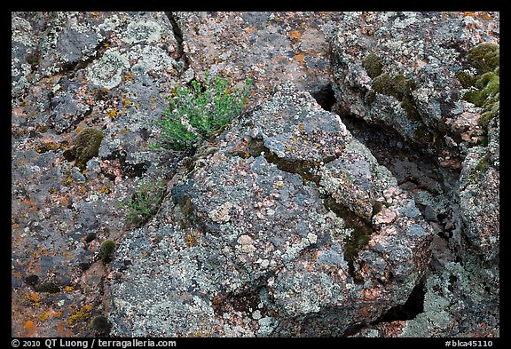 Gneiss and lichen. Black Canyon of the Gunnison National Park, Colorado, USA.