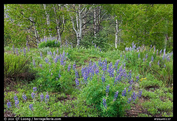 Spring flowers and forest. Black Canyon of the Gunnison National Park (color)