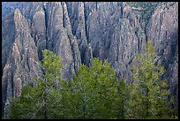 Pegmatite dikes. Black Canyon of the Gunnison National Park, Colorado, USA. (color)