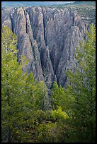 Trees and dikes across canyon. Black Canyon of the Gunnison National Park, Colorado, USA. (color)