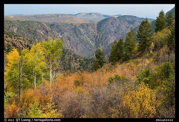 Shrubs and trees in fall color on canyon rim. Black Canyon of the Gunnison National Park (color)