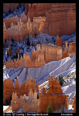 Snowy ridges and hoodoos, Bryce Amphitheater, early morning. Bryce Canyon National Park (color)