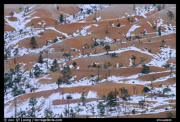 Ridges, snow, and trees. Bryce Canyon National Park (color)