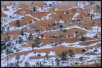 Ridges, snow, and trees. Bryce Canyon National Park, Utah, USA.
