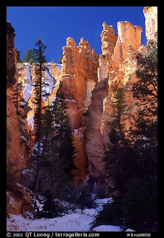 Hoodoos seen from  Queen's garden Trail. Bryce Canyon National Park, Utah, USA.