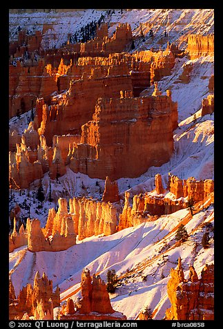 Bryce Amphitheater from Sunrise Point, winter sunrise. Bryce Canyon National Park, Utah, USA.