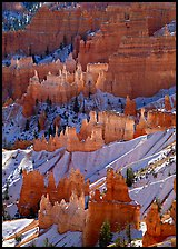 Hoodoos glowing in Bryce Amphitheater, early morning. Bryce Canyon National Park, Utah, USA. (color)