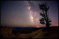 Bristlecone pine and Milky Way near Yovinpa Point. Bryce Canyon National Park, Utah, USA. (color)