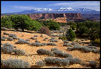 View with canyons and mountains, the Needles. Canyonlands National Park, Utah, USA.