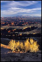 Monument Basin from Grand view point, Island in the sky. Canyonlands National Park, Utah, USA. (color)