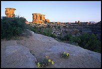 Wildflowers and towers, Big Spring Canyon overlook, sunrise, the Needles. Canyonlands National Park, Utah, USA. (color)