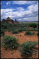 Sandstone towers in sandy flat basin, Chesler Park. Canyonlands National Park, Utah, USA.
