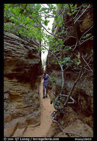 Hiker in narrow passage between rock walls, the Needles. Canyonlands National Park, Utah, USA.