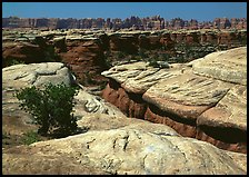Crack and rock needles near Elephant Hill, mid-day, Needles District. Canyonlands National Park, Utah, USA.