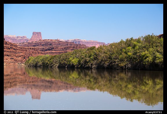 Trees on the shore of Colorado River. Canyonlands National Park (color)