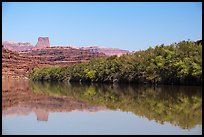 Trees on the shore of Colorado River. Canyonlands National Park, Utah, USA. (color)